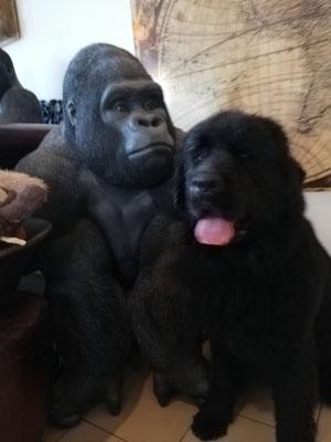 Da hab ich doch echt einen Affen getroffen