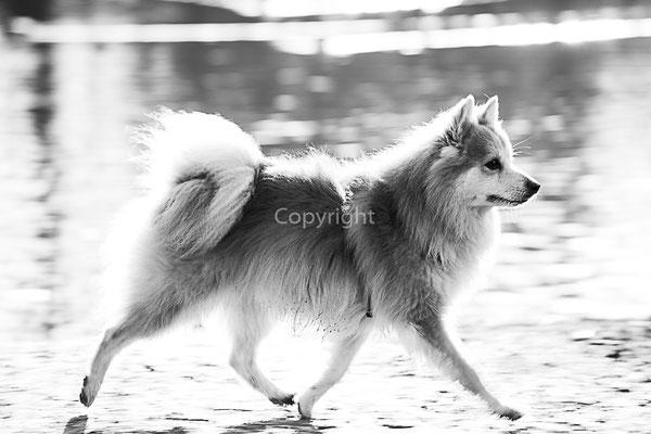 photos animaux, photo chien, animaux de compagnie, photographe, sens , yonne
