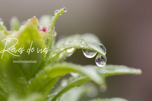 Photo nature, macro, détail photo , photographe Sens Yonne