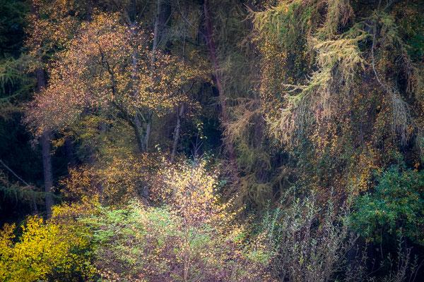 Herfstkleuren in bosrand in Vries - Tynaarlo © Jurjen Veerman