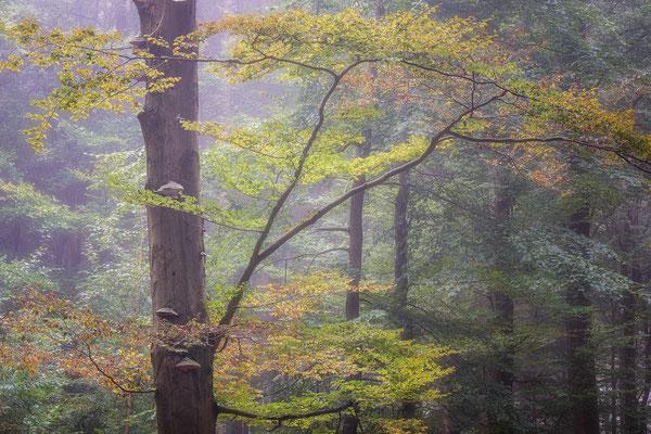 Herfstkleuren in de b ossen van Drenthe © Jurjen Veerman