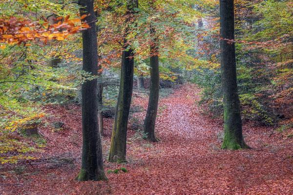 Bospad in herfstkleuren - Dwingelderveld © Jurjen Veerman