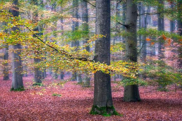 Herfstkleuren Dwingelderveld © Jurjen Veerman