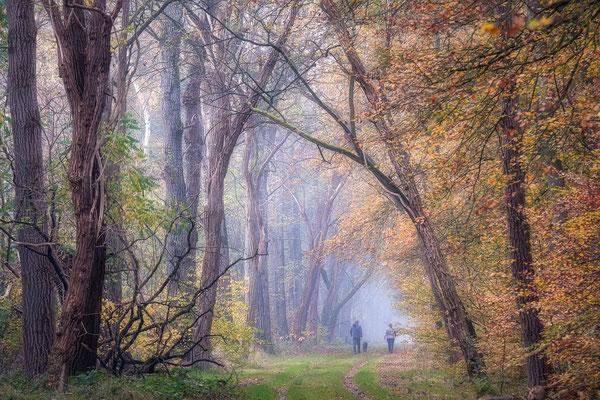Herfstlaan bossen Gieten - Borger © Jurjen Veerman