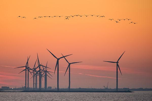 Windturbines Groningen Seaports © Jurjen Veerman
