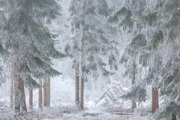 Winterlandschap Fochteloerveen © Jurjen Veerman
