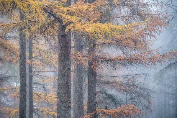 Mistige herfstochtend in de Drentse bossen - © Jurjen Veerman