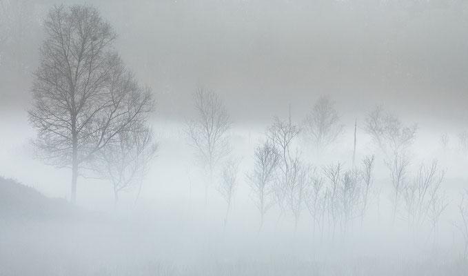 Grondmist - Gasterse Duinen © Jurjen Veerman