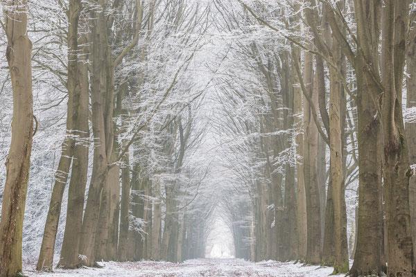 Winterlaan Fochteloereveen © Jurjen Veerman