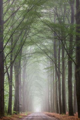 Boslaantje - Boswachterij Gieten Borger © Jurjen Veerman