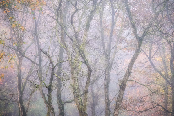 Herfsttakken boswachterij Gieten - Borger © Jurjen Veerman