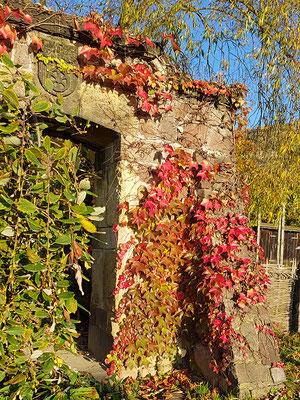 auf dem Weingut Hoflößnitz