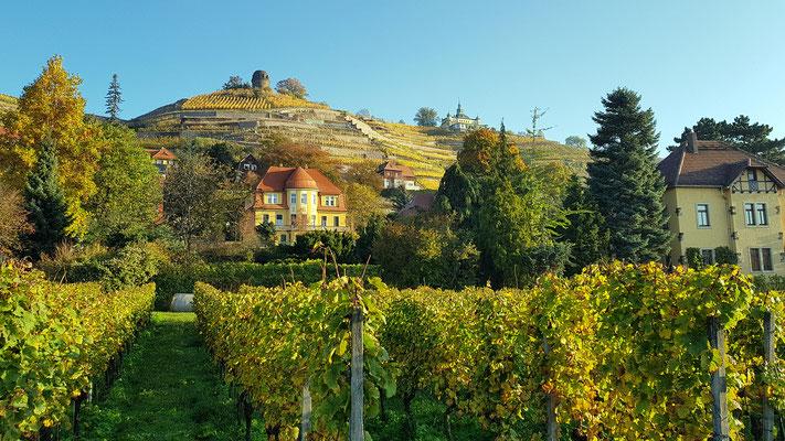 Blick vom Weingut Hoflößnitz