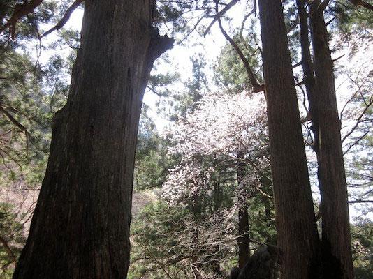 霊気漂う榛名神社ではまだ桜の時期でした。