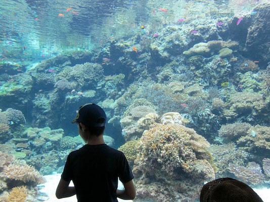 疲れのピーク「美ら海水族館」。周りが中国人だらけで更に疲弊する