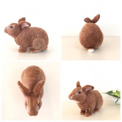 Netherland Dwarf rabbit ♂【Lulu】