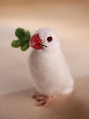 Java sparrow♂【Chanran】
