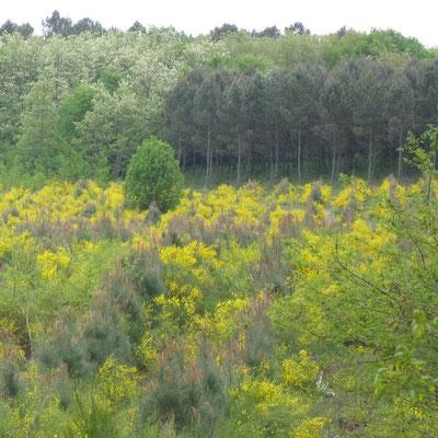 Balades dans les Parcs naturels nationaux et régionaux