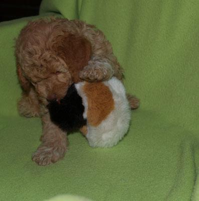 Aimee hatte nur Spaß mit der Ente! Ich soll hoch gucken - nee... keine Lust .... so sind die Wauzis :-)