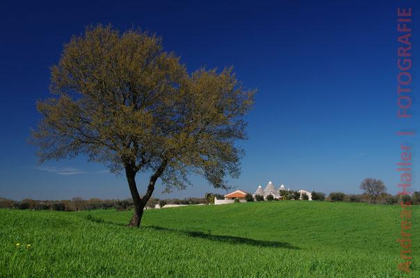 Frühlingserwachen mit Trulli-Bauten im Valle d'Itria