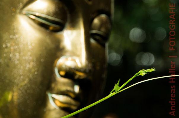 Colombo: Buddha wacht über den Stadttempel