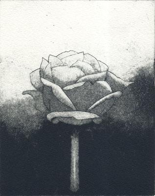 La Rose, eau-forte et pointe sèche, 13x16cm, édition de 8, 2017