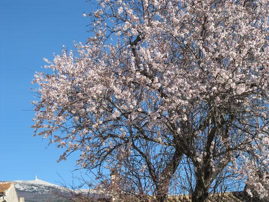 l hirondelle-bedoin-mont ventoux-gite-tout equipée-vaucluse-vue  ventoux-printemps-rando-velo
