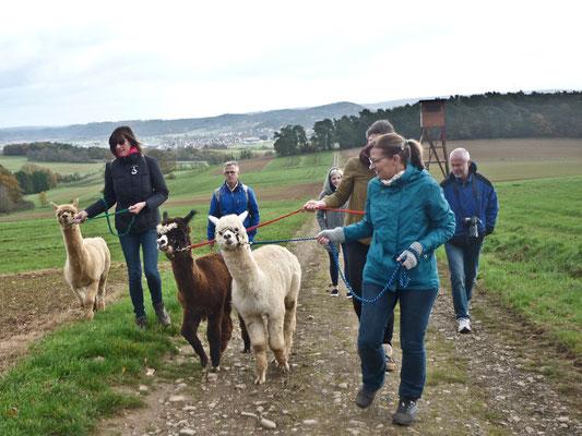 Alpaka Wanderung Hessen