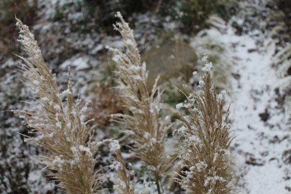 Bornhöved Hanggarten winterliche Gras-Stimmung