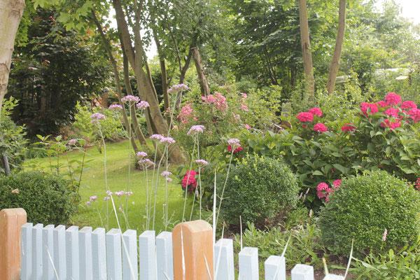 Die Hortensien-Hecke im Moritzbeet soll 2 Meter hoch werden