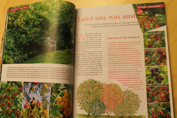 KoestelGarten - Der HangGarten. Mein schöner Garten als Idee zur Vogelhecke