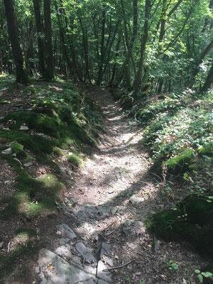 Dieser abschüssige Weg könnte sich tatsächlich auch am Jakobsweg befinden ....