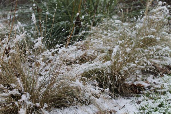 Koestelgarten winterliche Gras-Stimmung