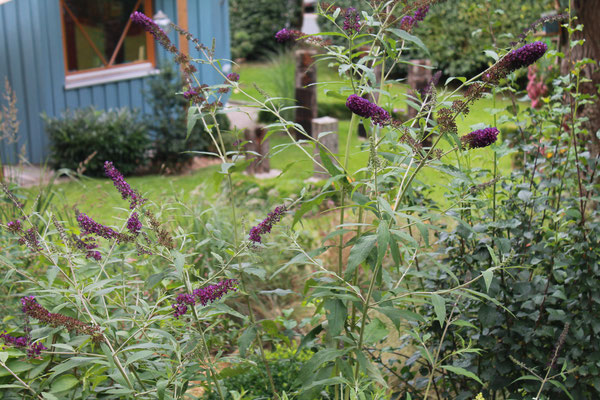 4 Schmetterlings-Pflanzen sollen den Insekten helfen