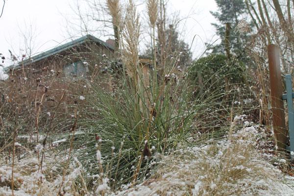 Hanggarten winterliche Gras-Stimmung