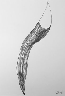 Seed sketch 7 / pencil on paper, 50x70cm, 2005