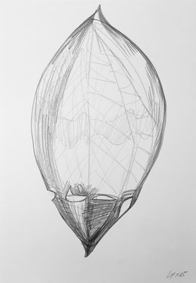 Seed sketch 4 / pencil on paper, 50x70cm, 2005