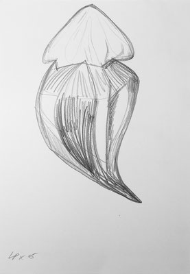 Seed sketch 3 / pencil on paper, 50x70cm, 2005