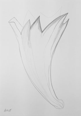 Seed sketch 6 / pencil on paper, 50x70cm, 2005