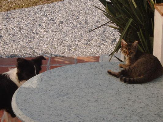 Minka, die Katze von nebenan.........