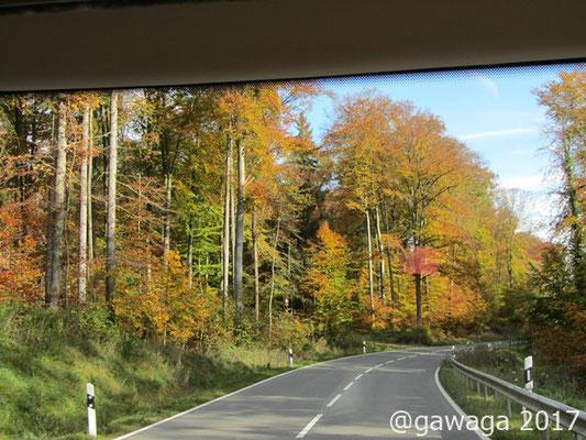 unterwegs begeistern uns die herbstlichen Wälder
