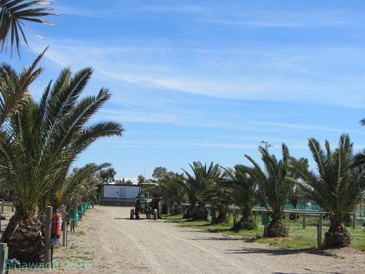 palmengesäumte Stellplätze