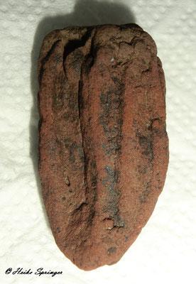 Koralle (evtl. Skolithos)  4cm hoch