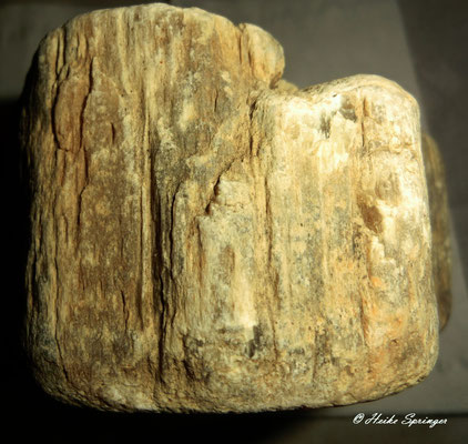 Fossiles Holz - verkieselt