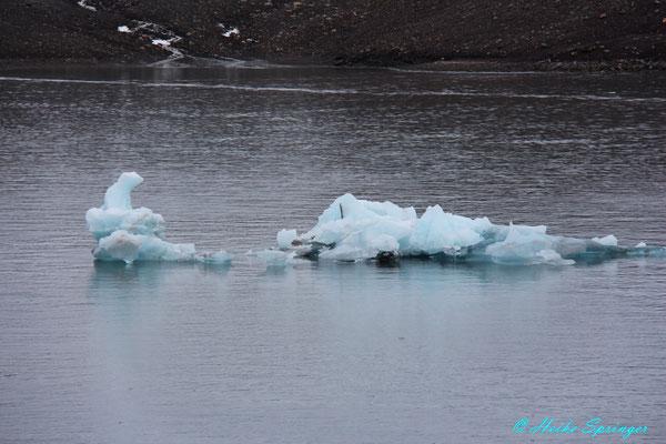 Ein Eis-Eisbär