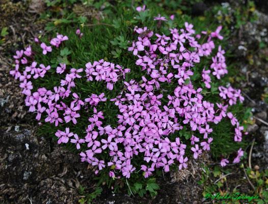 Blumen in der Habenichtbukta