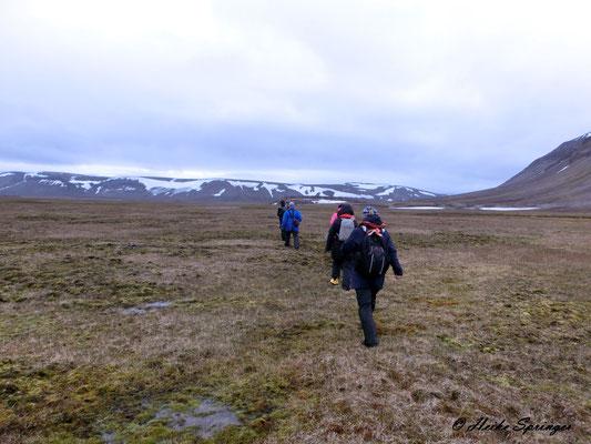 Wanderung durch die Tundra