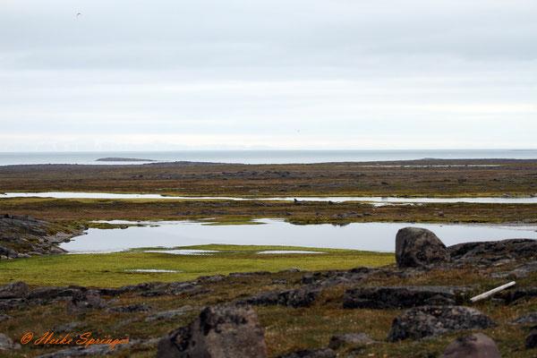 Tundralandschaft