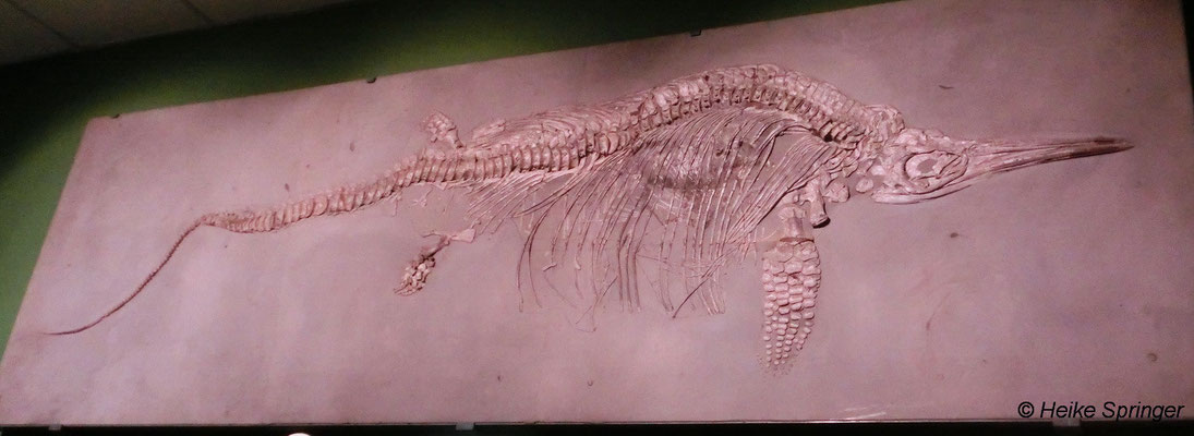 Fischsaurier