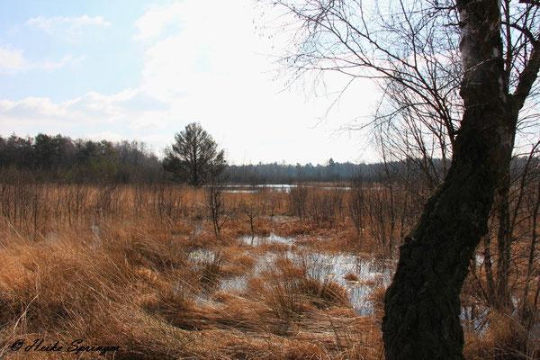 Das Moor steht unter Wasser